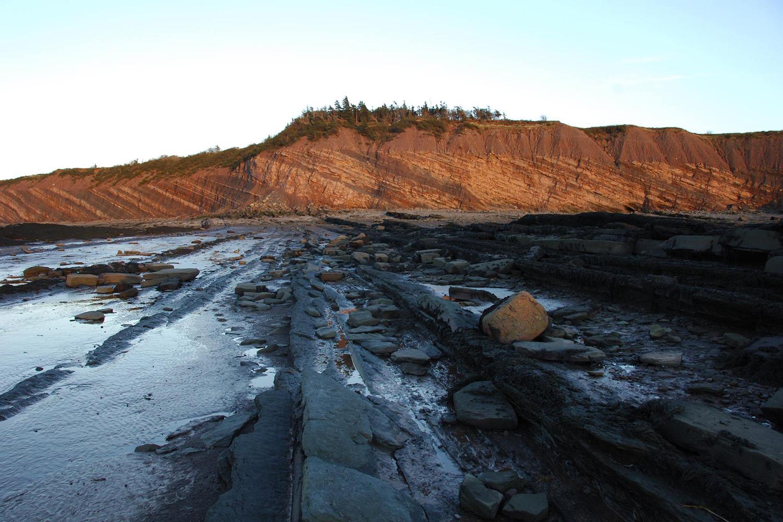 oldest reptile fossil joggins fossil cliffs