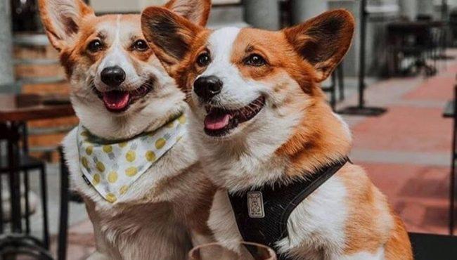 dog-friendly patios calgary