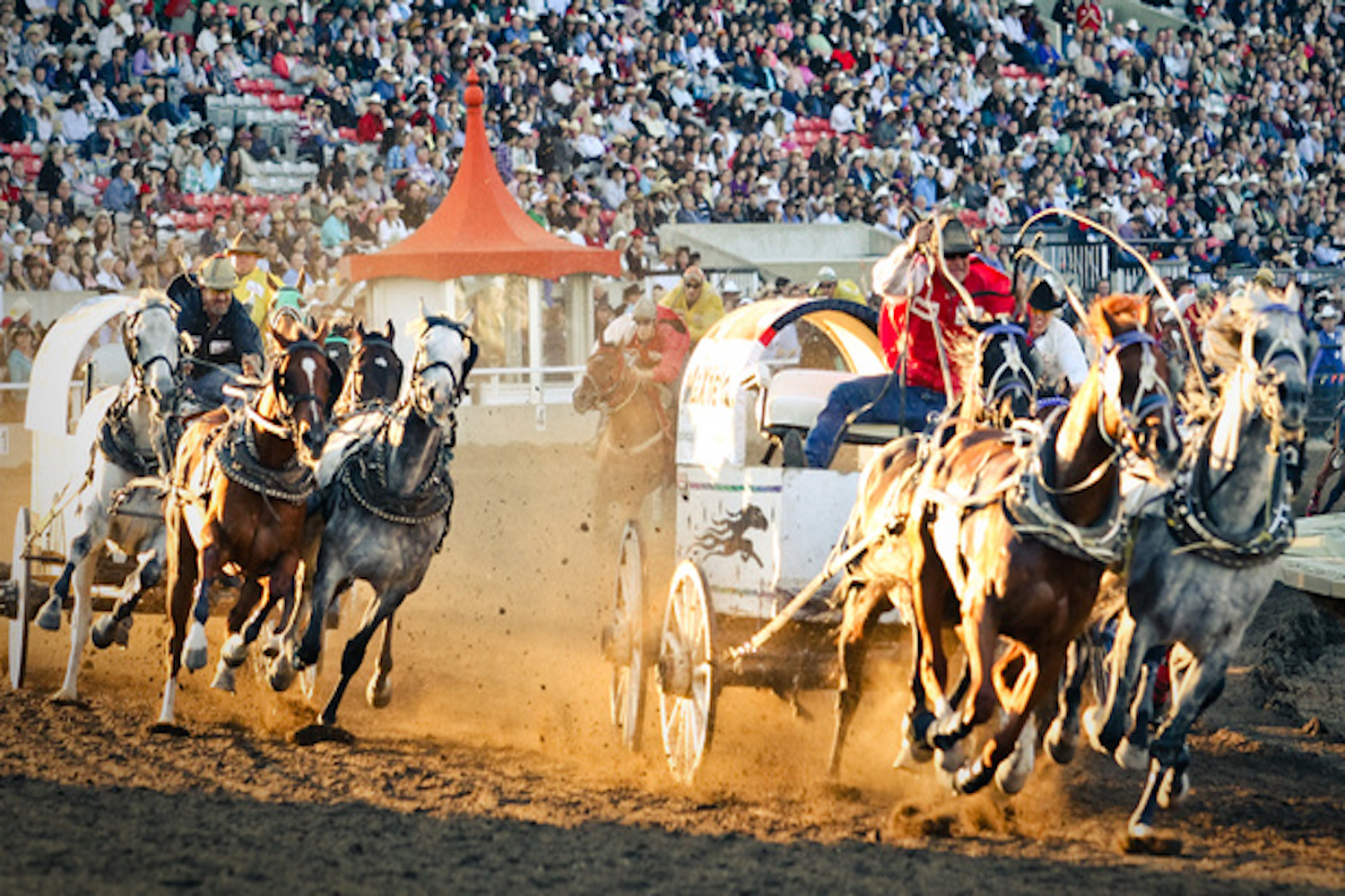 things you can only do in calgary stampede