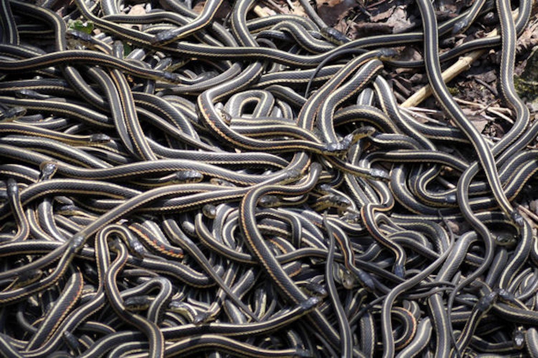Snake Pits