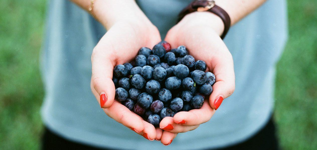 seattle blueberry farms