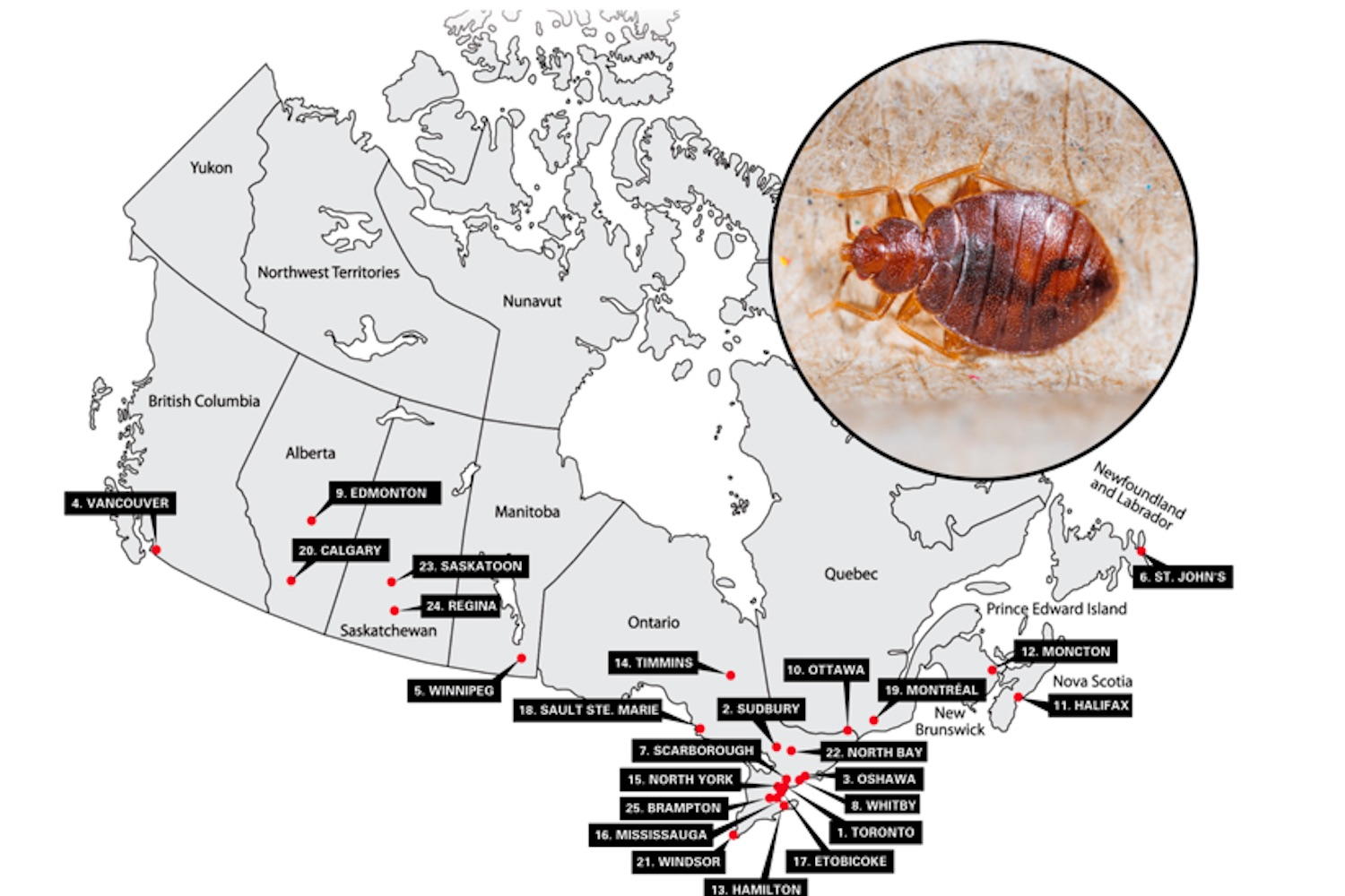 bed bug cities