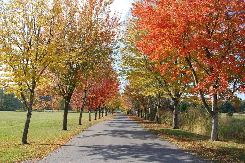 fall day trips bellingham