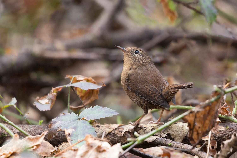 birds richmond winter vancouver