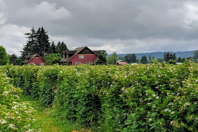 blueberry farms seattle