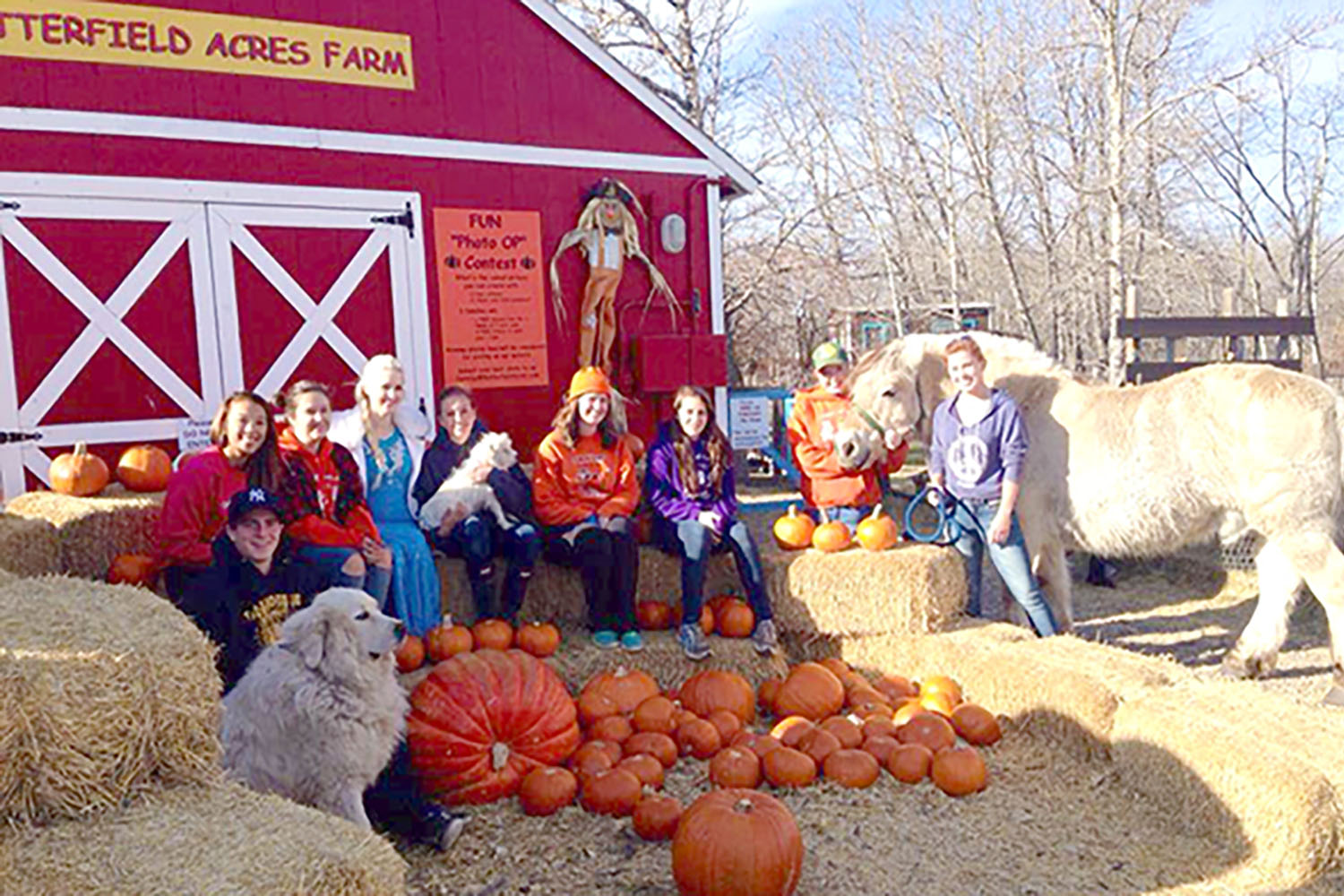 butterfield-acres-pumpkin-patches-calgary
