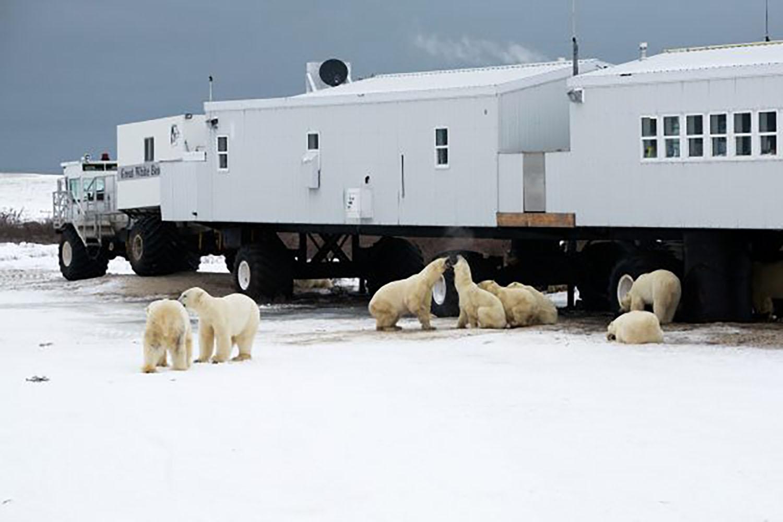 canada-manitoba-churchill-tundra-lodge-nathab-600x0-c-default