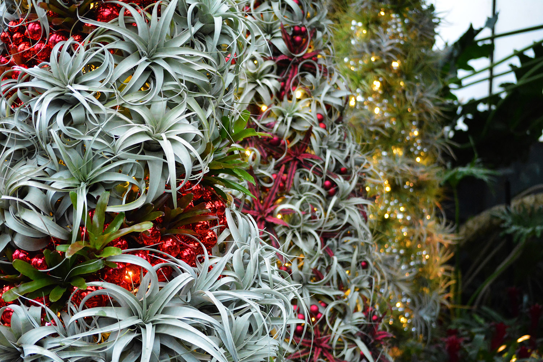 markham christmas tree market