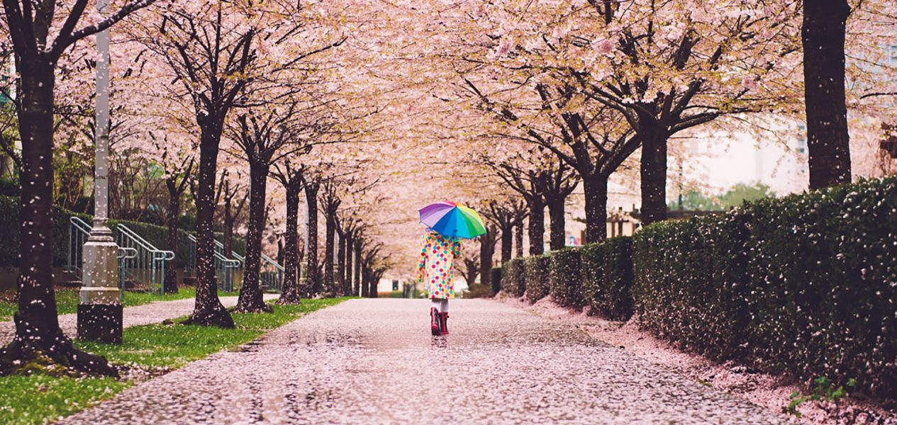 cherry-blossom-things-to-do-vancouver-