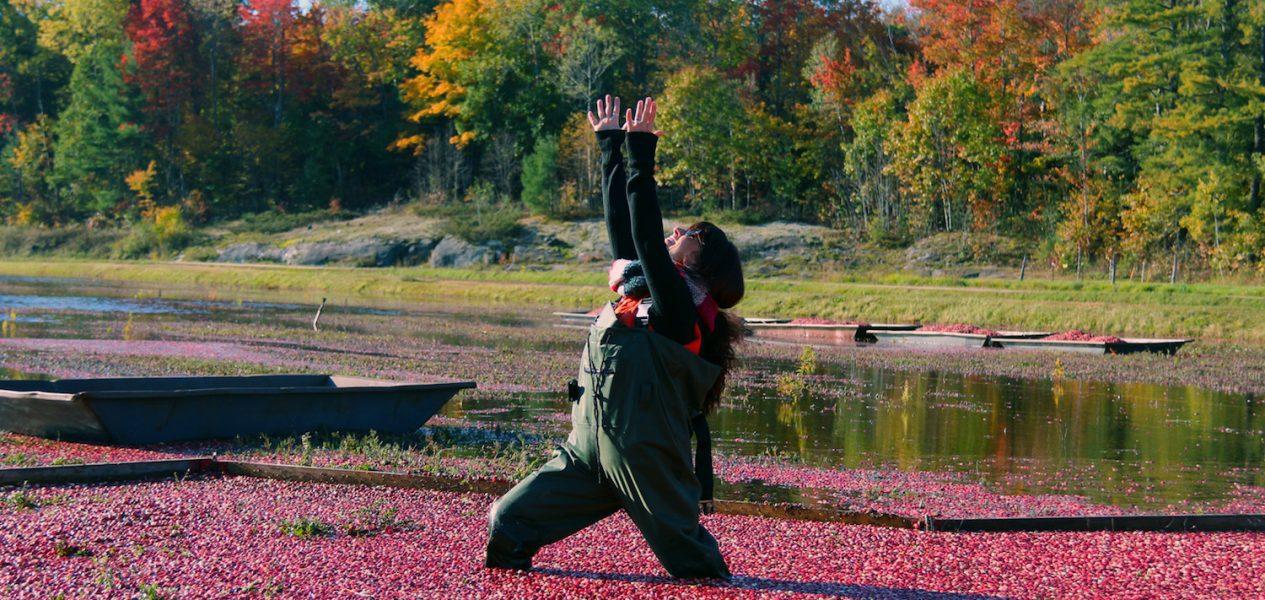johnson's cranberry marsh