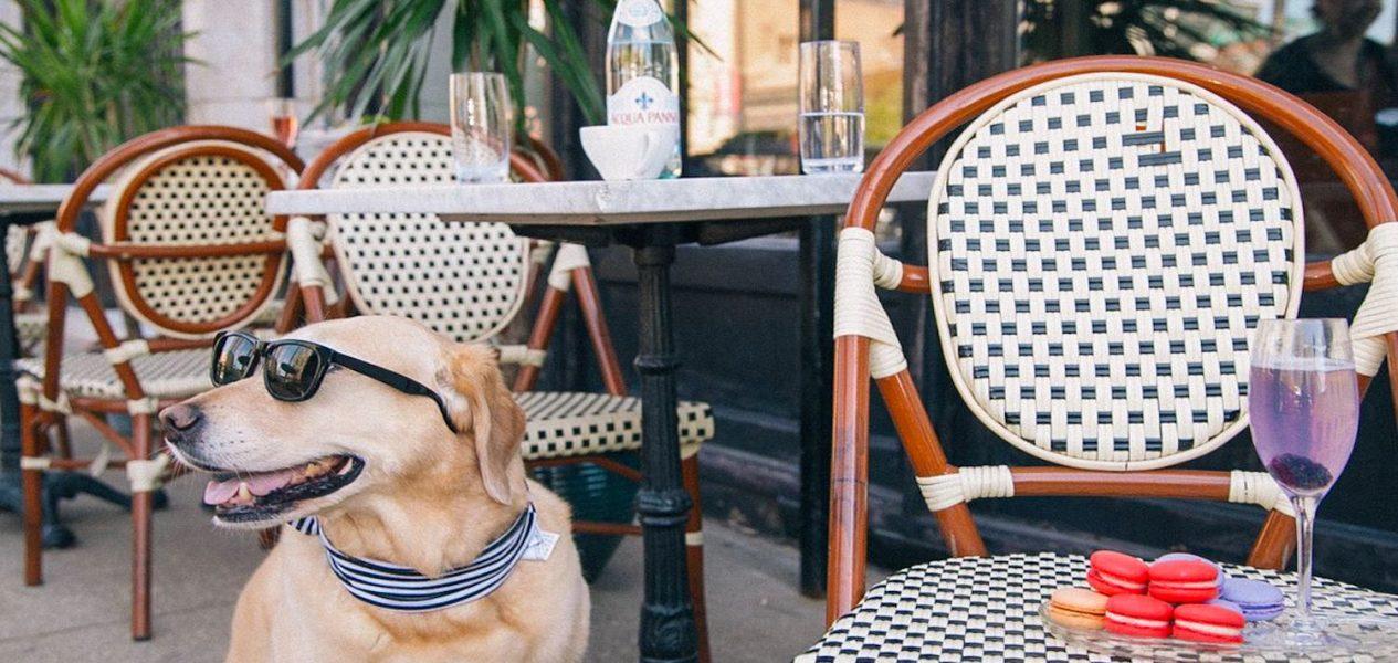 calgary patio pet friendly