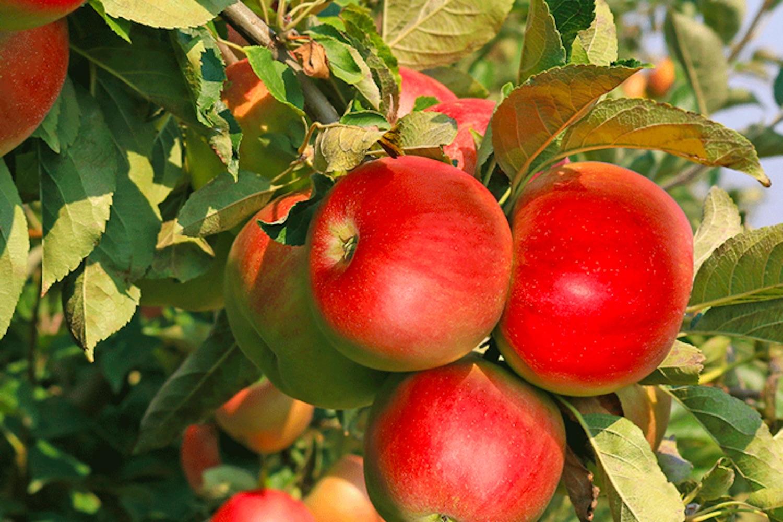 pick your own fruit toronto