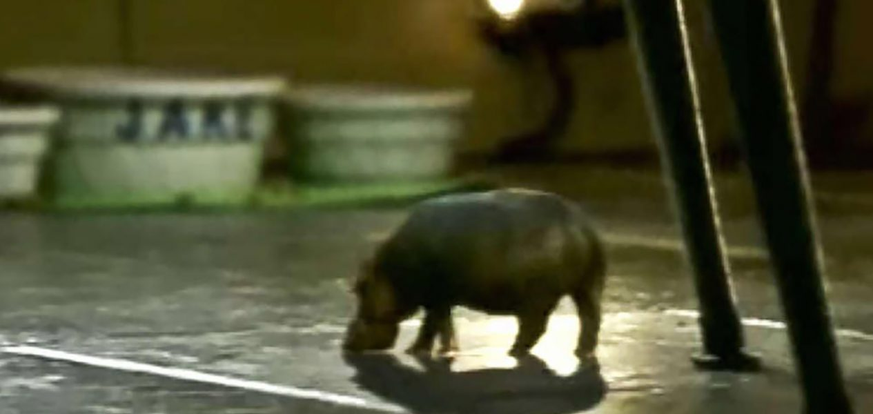 canadian commercials house hippo