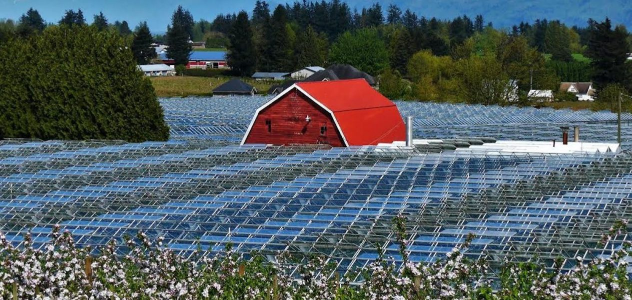 u-pick taves farms