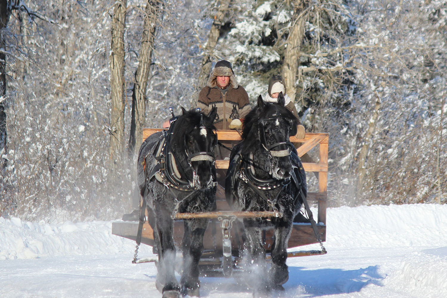 holiday events near calgary