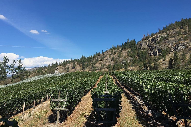 nichol winery