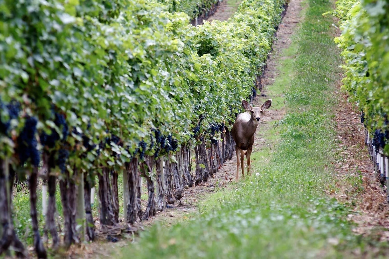 best bc wineries nk'mip