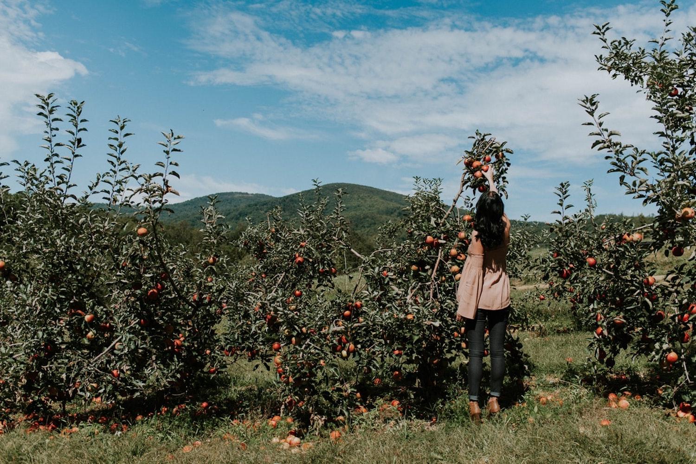 apple picking date toronto