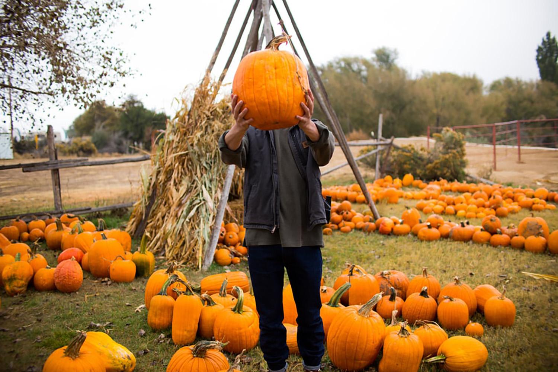 calgary autumn pumpkin patches