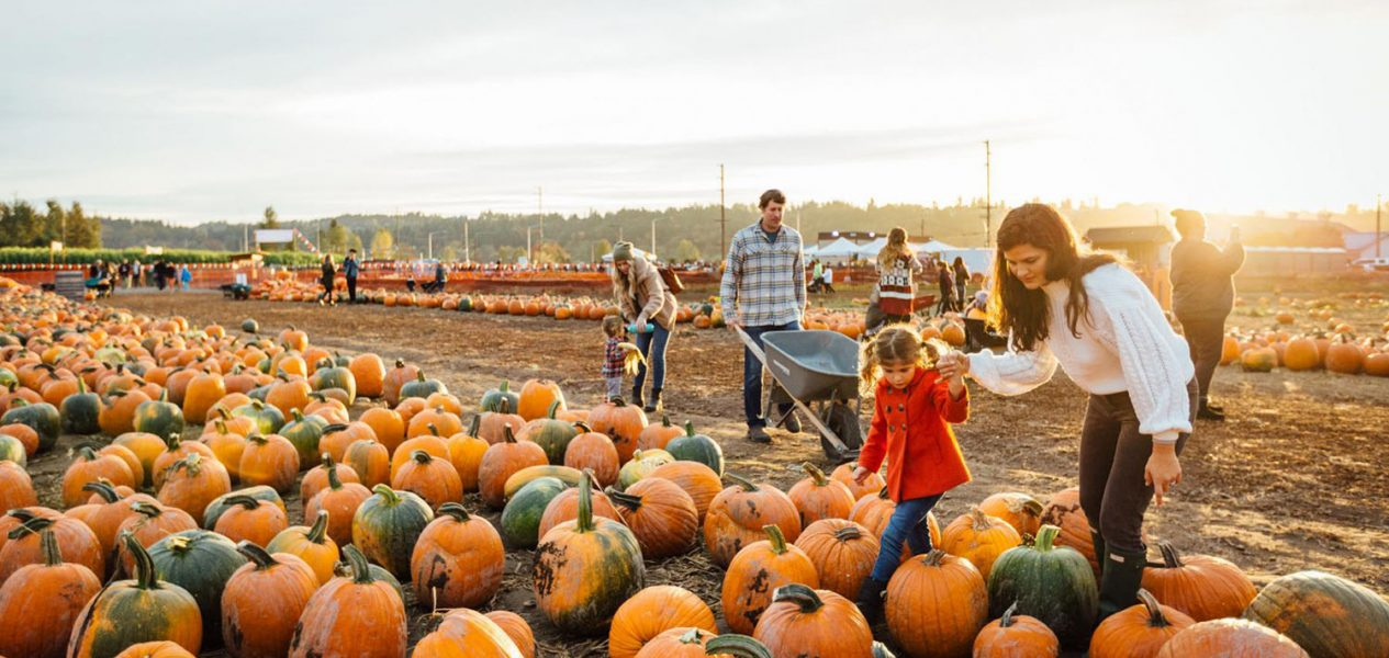 pumpkin patches calgary