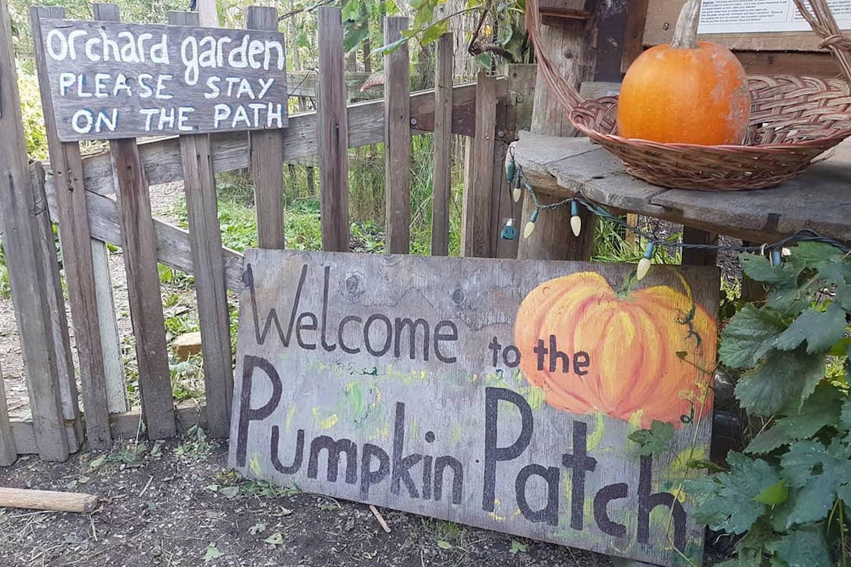 best pumpkin patches around vancouver