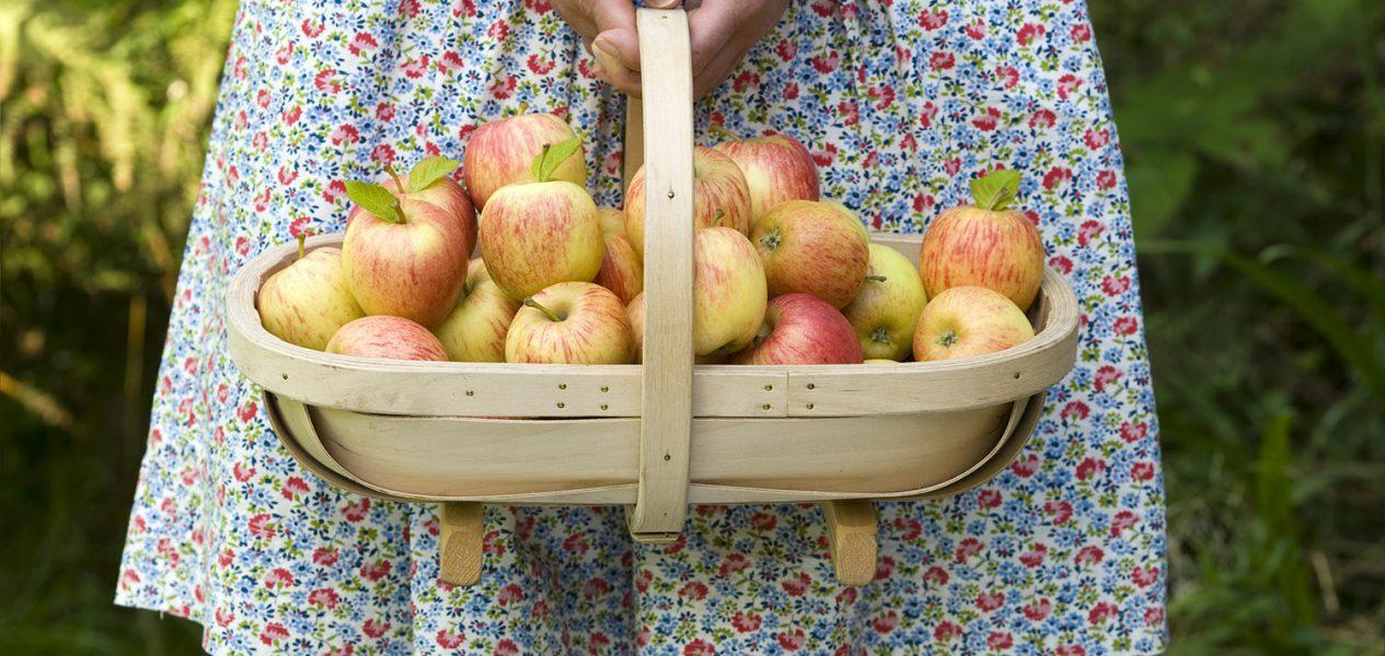 apple picking near toronto