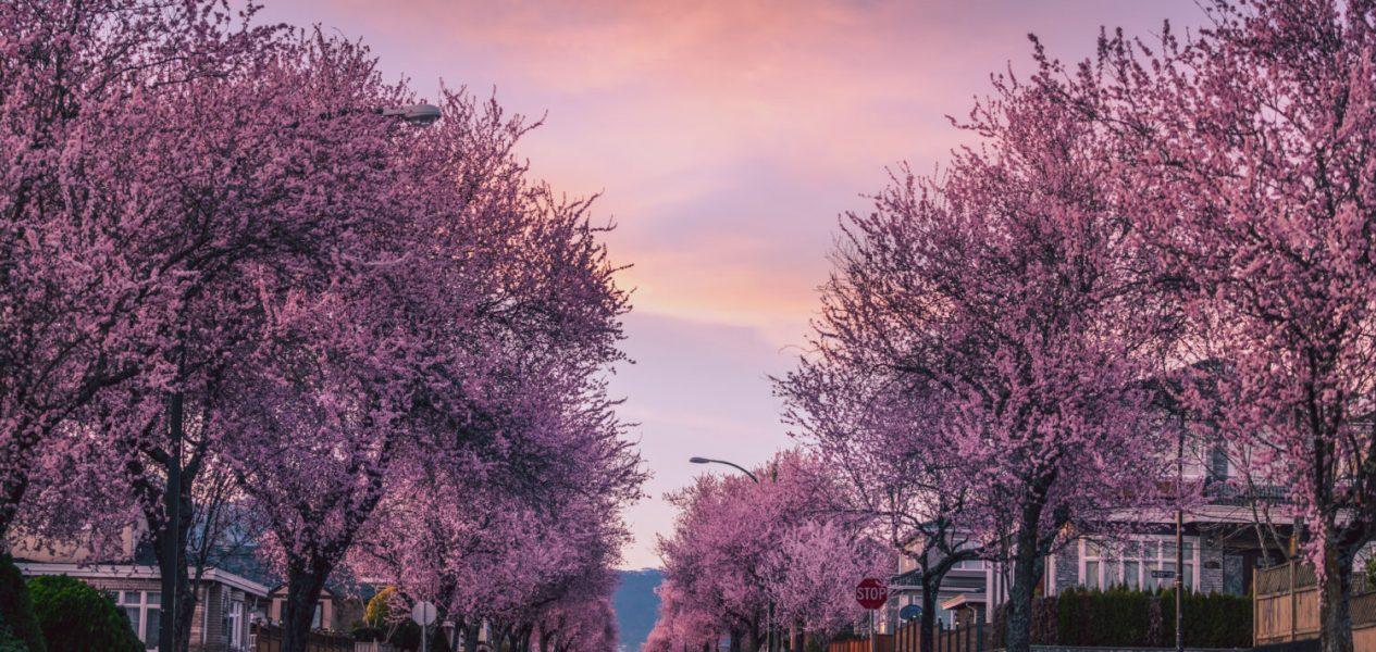 spring forecast canada