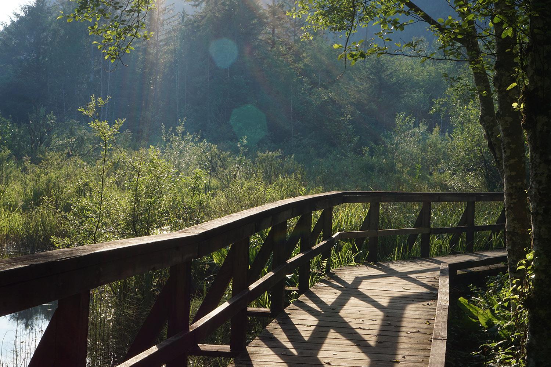 sasquatch provincial park camping near vancouver