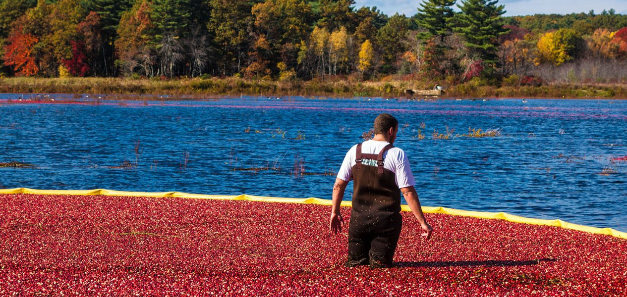 riverside cranberry farm