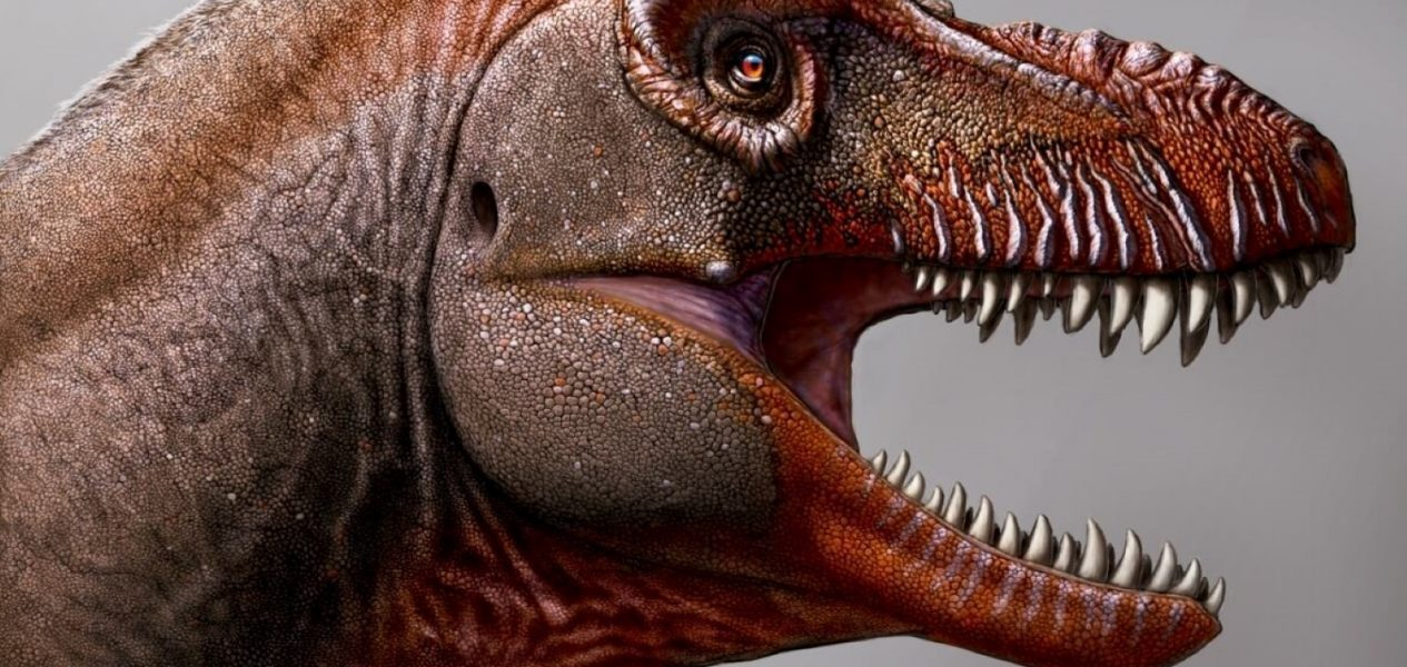 First Canadian tyrannosaur in 50 years, just discovered in Alberta