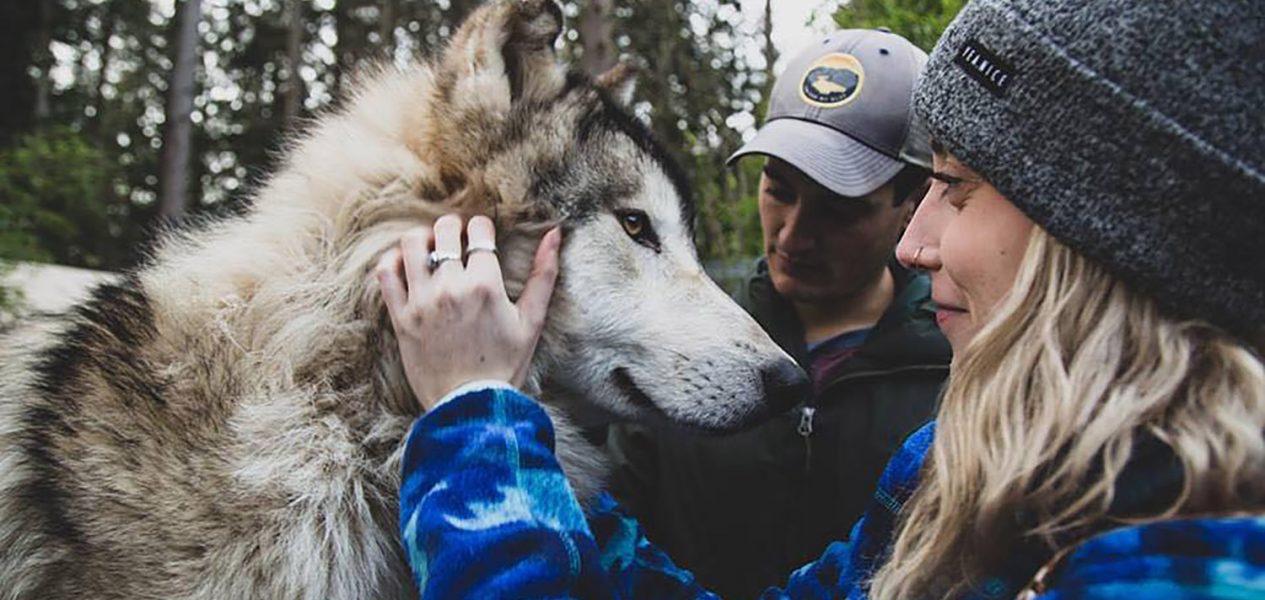 wolf encounter wolf sanctuary