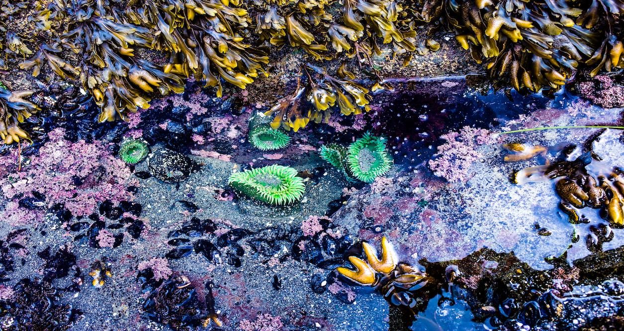 low tides west seattle