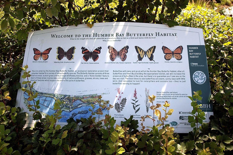 humber bay butterfly habitat