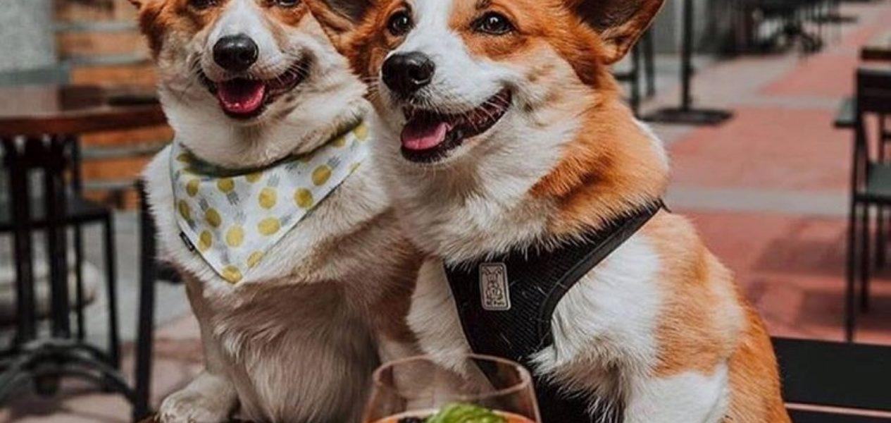 dog-friendly patios toronto