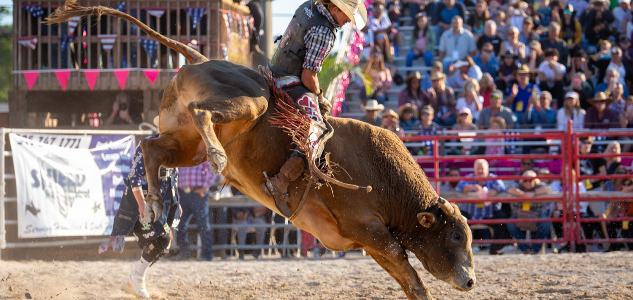 rodeo official sport of alberta