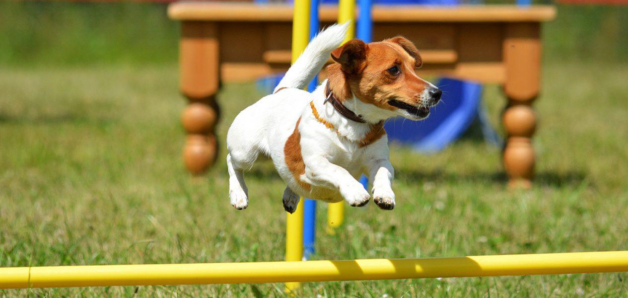 superdogs agility park false creek vancouver