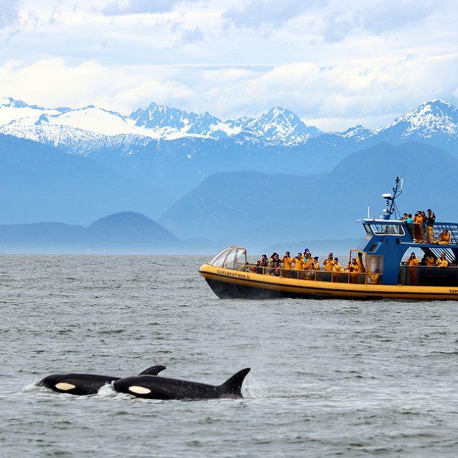 van whale watch
