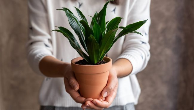 fleur & co plants