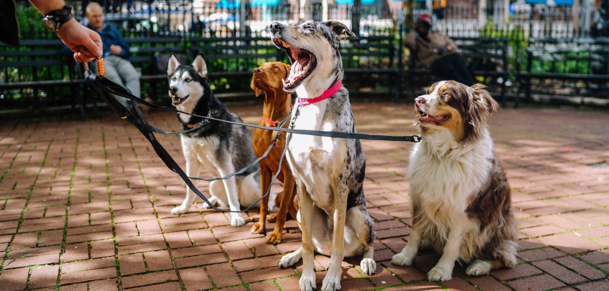 dog breeds calgary