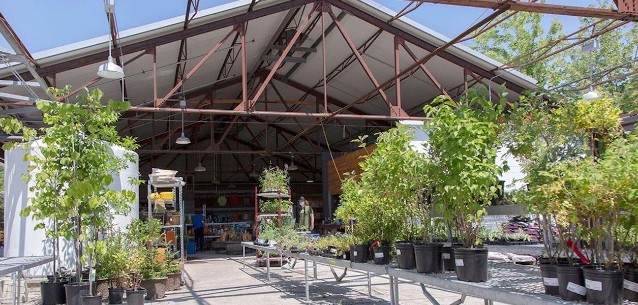 evergreen garden market