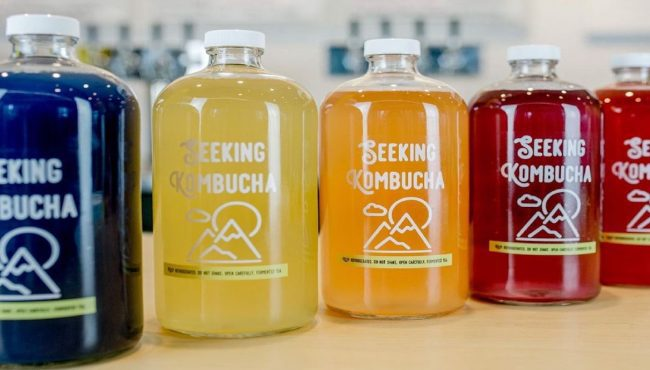 seeking kombucha