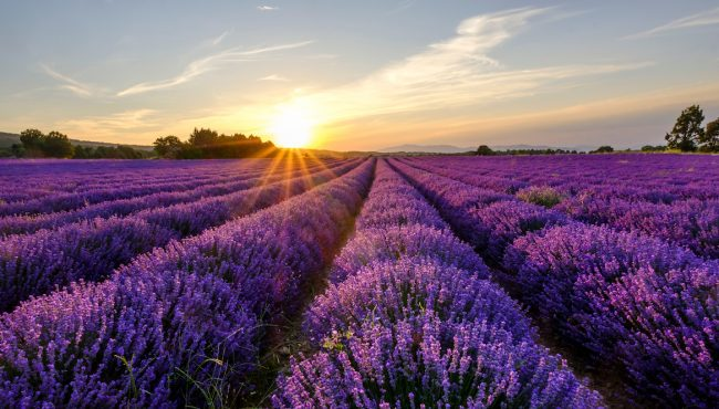 sequim lavender festival