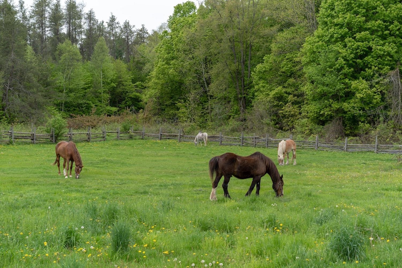 working horse barn
