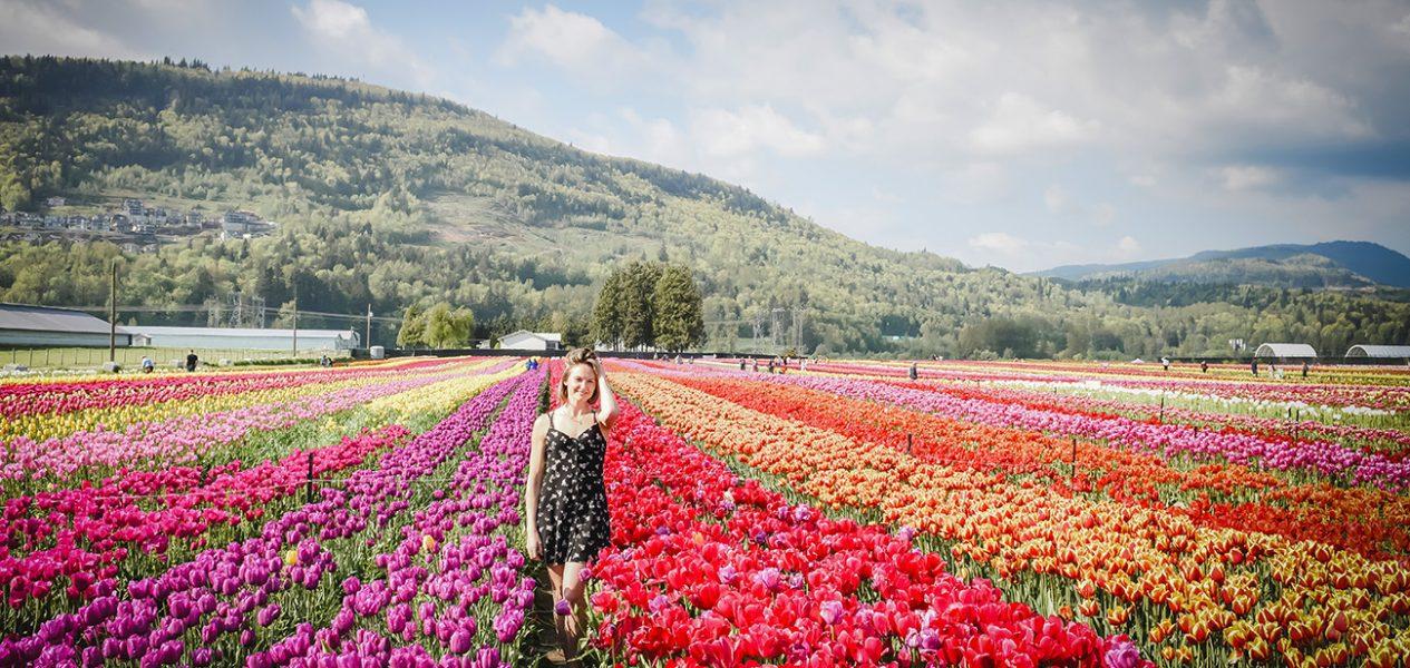 lakeland flowers u-pick tulip farm