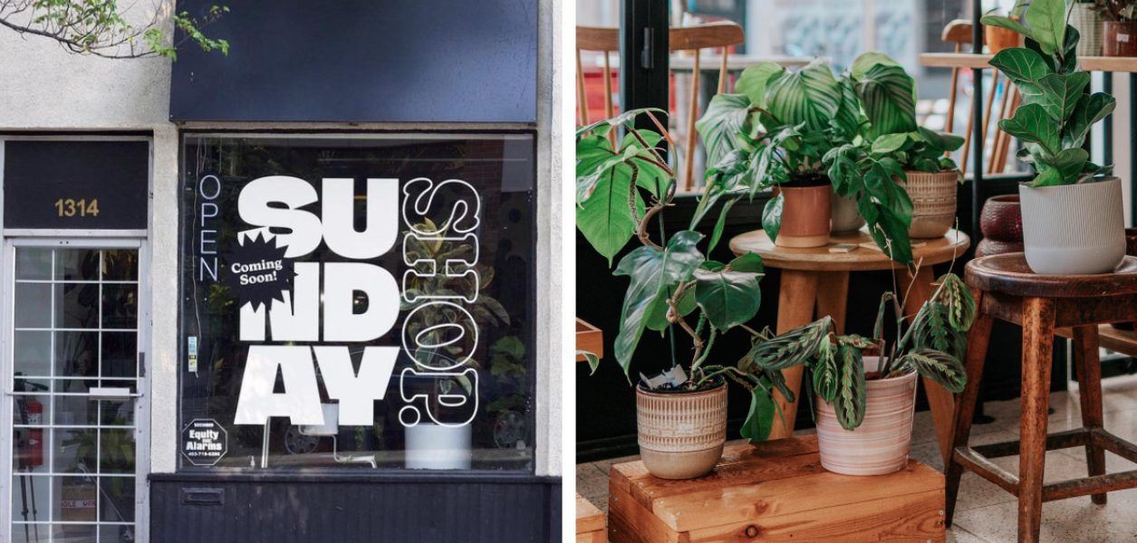 A brand new tropical plant store opens this weekend downtown!