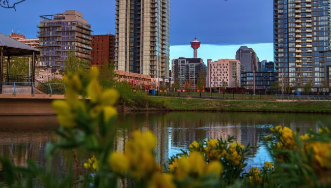 do to Calgary week