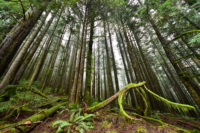 norvan falls hikes near vancouver