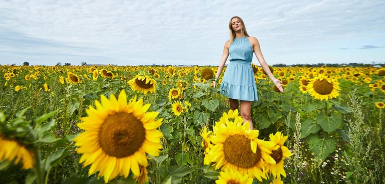 sunflower field mississauga