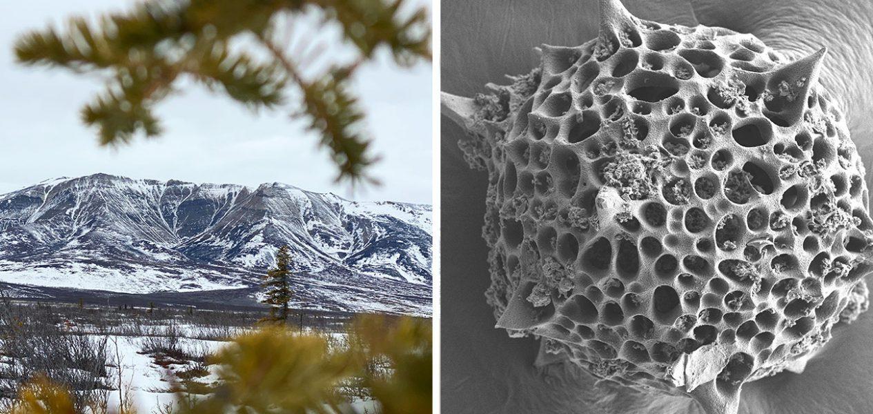 fossil oldest animal evidence canada