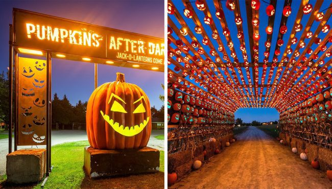 pumpkins after dark calgary